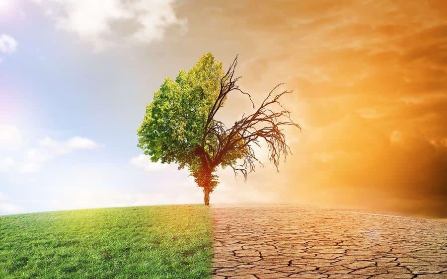 Ecotree illustration af en grøn og bæredygtig verden sammenlignet med et gotisk landskab